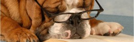 cropped-dog-reading.jpg